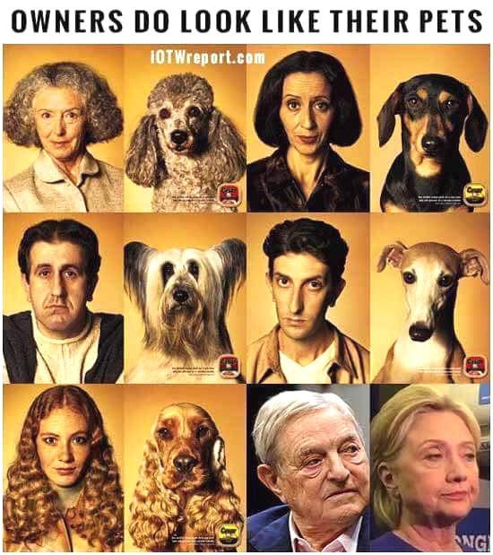 owners-pets.jpg