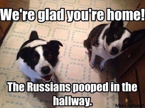 russian dog poop.jpg